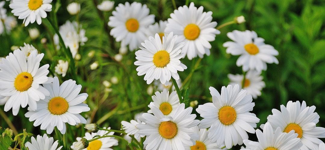 Memilih Bunga Papan Ucapan Duka Cita Yang Tepat