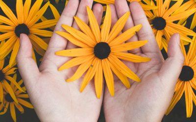 Jenis Tanaman Bunga Hias didalam Pot