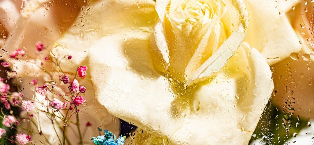 Mengenal jauh Bunga Protea